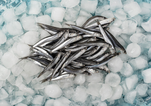 Anchovy (Fresh Frozen)