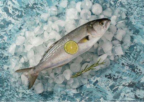 Bluefish (Fresh Frozen)